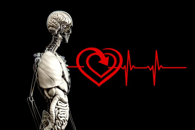 Can Your Heart Predict the Future anatomy