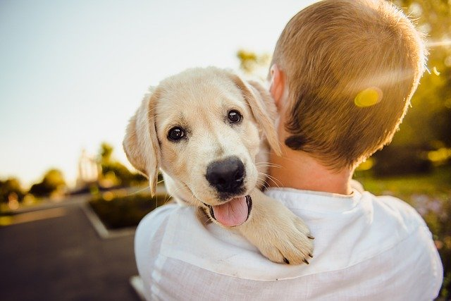 dog is love: how dogs bond with humans