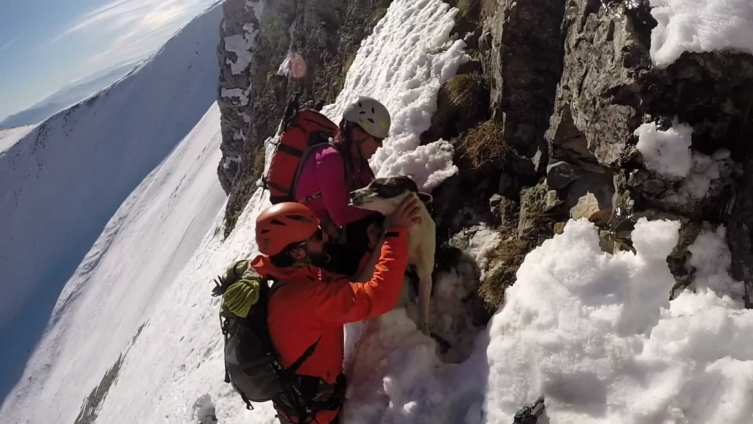 The Lucky Alpinist Dog who got stranded