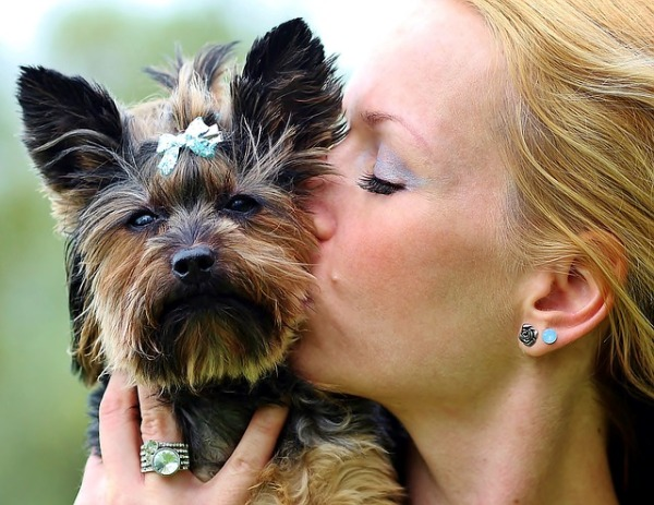 small dog syndrome: Blond woman kissing Yorkie puppy