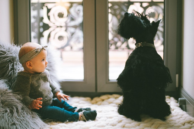 raising dogs and raising kids together